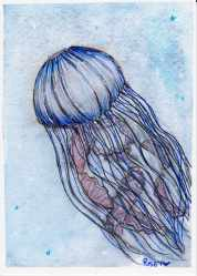blue jelly
